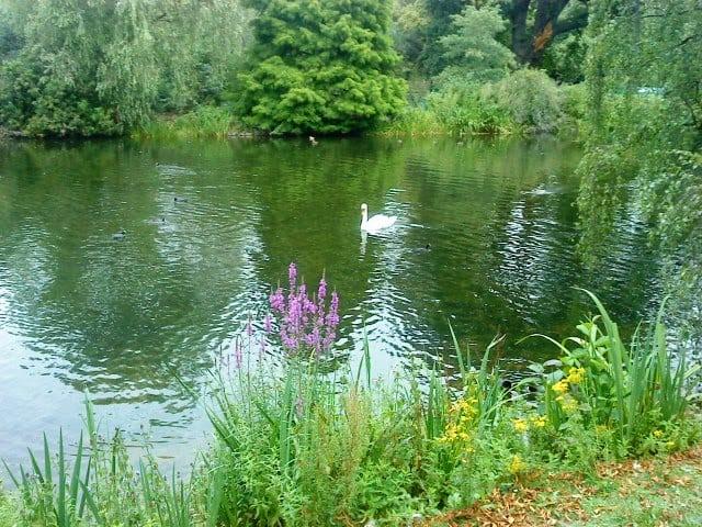 גן אנגלי