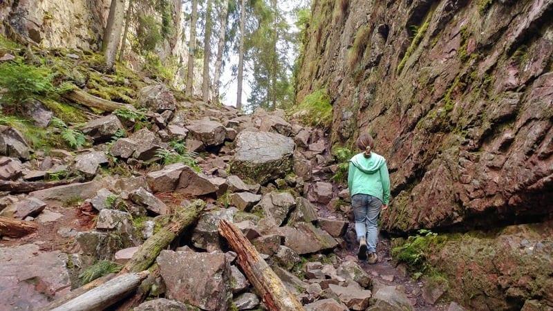 מסלול טיול ביער בשוודיה