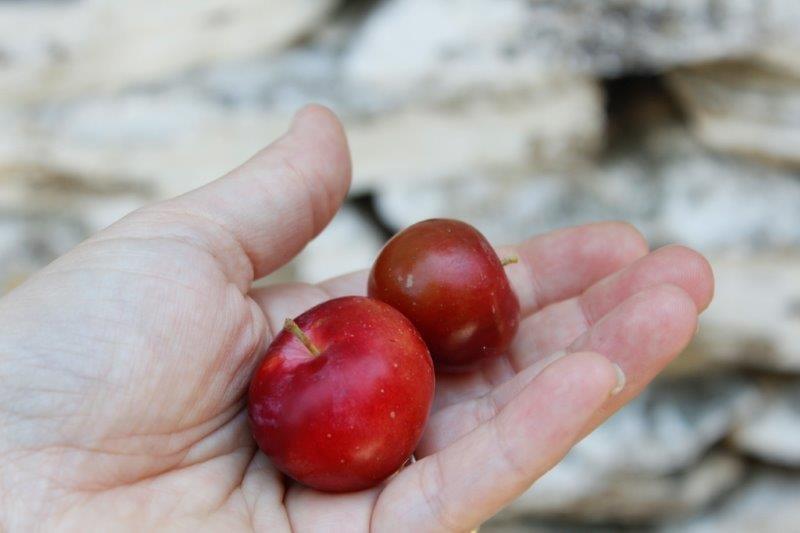 יוון עם ילדים - תפוח
