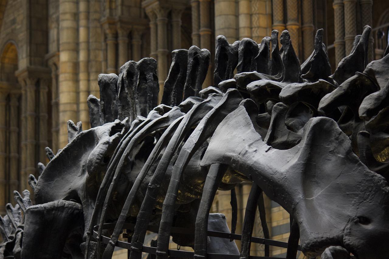מוזיאון הטבע בלונדון