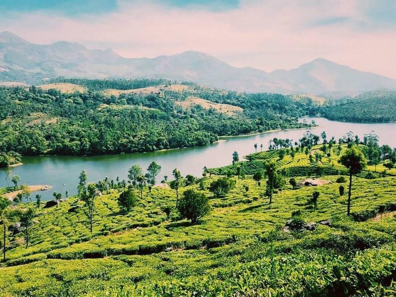 מטעי התה במונאר
