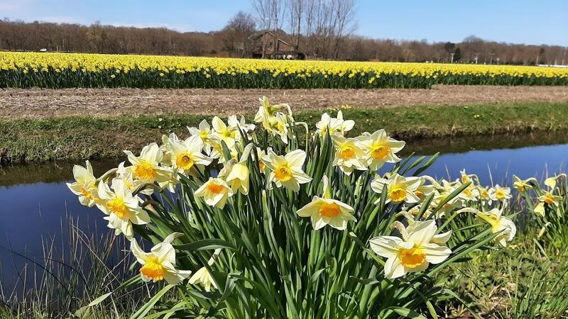 כפר הפרחים אלסמיר בהולנד